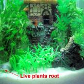 Creating an even more balanced aquarium